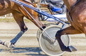 Live Harness Racing Opening Day @ Dresden Raceway